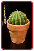 Cactus kaars, 10x7cm
