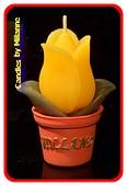 Tulp Kerze Gelb, höhe: 9 cm